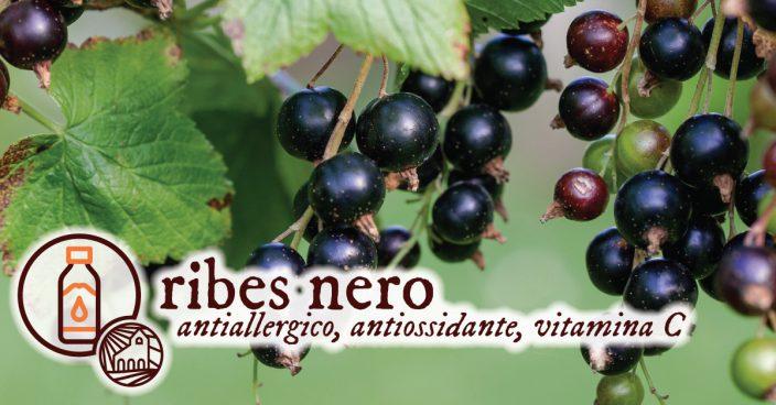 Ribes Nero Antiallergico Monache Benedettine di Orte